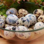 6 Manfaat Telur Puyuh Buat keluarga/Hewan Di Rumah